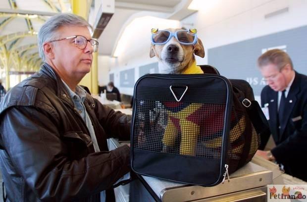 قوانین سگ و گربه در هواپیما