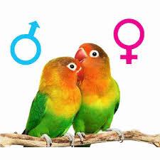 راهنمای تعیین جنسیت پرندگان